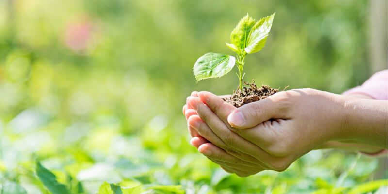 Two hands holding a small plant seedling